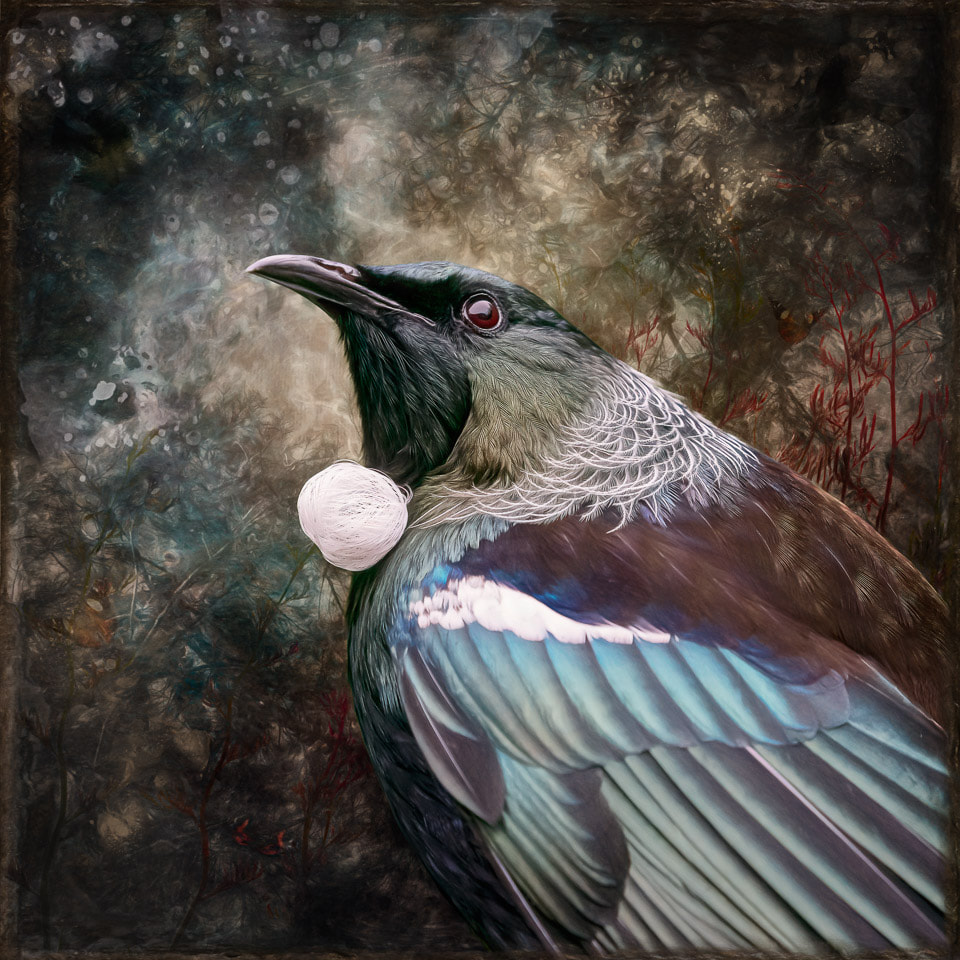 Photo art of a tui by Judi Lapsley Miller