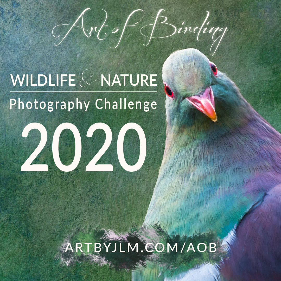 Art of Birding Wildlife & Nature Photography Challenge banner for 2020, featuring a kererū